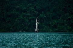 Selva tropical del sok de Khao, Tailandia Fotos de archivo