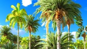 Selva tropical durante uma rendição do dia 3d Imagens de Stock