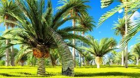 Selva tropical durante uma rendição do dia 3d Fotografia de Stock