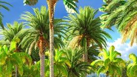 Selva tropical durante uma rendição do dia 3d Imagem de Stock Royalty Free