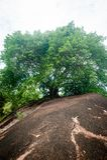 Selva tropical en Borneo fotos de archivo