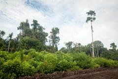 Selva tropical en Borneo fotografía de archivo