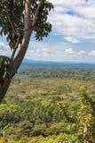 Selva tropical en el corazón de la sabana Kakamega Forest Kenya, África foto de archivo libre de regalías
