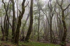 Selva tropical en el parque de Garajonay La Gomera, islas Canarias fotos de archivo libres de regalías