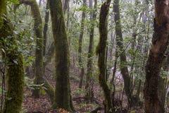 Selva tropical en el parque de Garajonay La Gomera, islas Canarias imagen de archivo libre de regalías