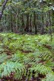 Selva tropical en el parque de Garajonay La Gomera, islas Canarias fotografía de archivo