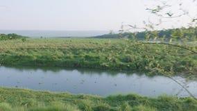 Selva tropical en el parque nacional de Chitwan, Nepal almacen de video