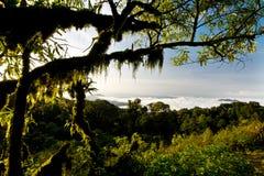 Selva tropical en el parque nacional de Intanon Fotos de archivo libres de regalías