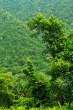 Selva tropical en el parque nacional de Khaoyai Imagen de archivo