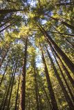 Selva tropical en la isla de Vancouver, Columbia Británica, Canadá Fotografía de archivo