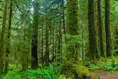 Selva tropical en Oregon Imágenes de archivo libres de regalías