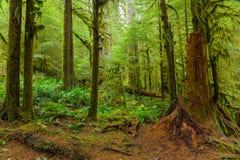 Selva tropical en Oregon Fotografía de archivo