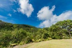 Selva tropical en Seychelles Foto del paisaje con el cielo azul Imágenes de archivo libres de regalías