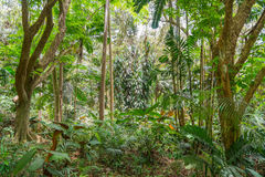 Selva tropical hawaiana en el Koolaus Foto de archivo