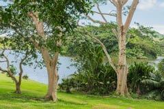 Selva tropical hawaiana en el Koolaus fotos de archivo libres de regalías