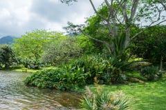 Selva tropical hawaiana en el Koolaus foto de archivo libre de regalías