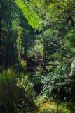 Selva tropical tropical hermosa cerca de las aguas termales fotos de archivo libres de regalías