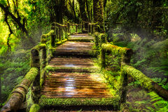 Selva tropical hermosa en el sendero de ka del ANG Imagen de archivo