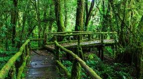 Selva tropical hermosa en el sendero de ka del ANG Imágenes de archivo libres de regalías