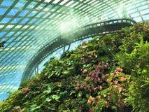 Selva tropical interior singapurense Imagen de archivo libre de regalías