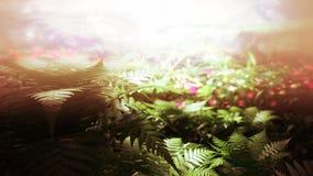 Selva tropical mágica con la iluminación hermosa stock de ilustración