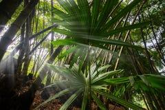 Selva tropical profunda de Asia sudoriental con la vegetación densa fotografía de archivo