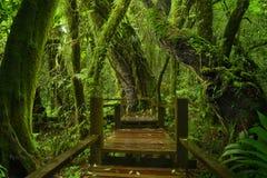 Selva tropical profunda de Asia sudoriental con la vegetación densa fotos de archivo libres de regalías