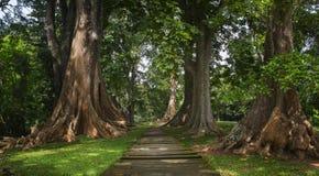 Selva tropical profunda de Asia sudoriental con la vegetación densa foto de archivo