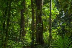 Selva tropical profunda de Asia sudoriental con la vegetación densa imágenes de archivo libres de regalías