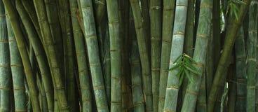 Selva tropical profunda de Asia sudoriental con la vegetación densa fotografía de archivo libre de regalías