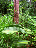 Selva tropical Queensland Australia de Kuranda Imagenes de archivo