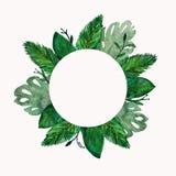 A selva tropical sae do quadro ilustração do vetor
