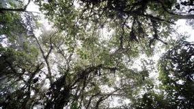 Selva tropical superior del árbol metrajes