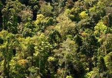 Selva tropical. Textura abstracta. foto de archivo libre de regalías