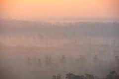 Selva tropical tropical Imágenes de archivo libres de regalías