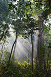 Selva tropical tropical Fotografía de archivo libre de regalías