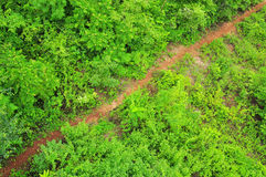 Selva tropical tropical Imagen de archivo libre de regalías