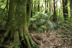 Selva tropical tropical Fotos de archivo