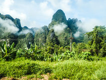 Selva tropical tropical de Khao Sok Imágenes de archivo libres de regalías