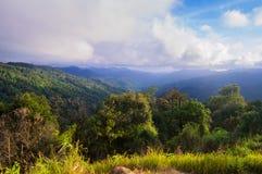 Selva tropical tropical después de la lluvia foto de archivo libre de regalías