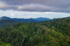 Selva tropical tropical después de la lluvia fotografía de archivo