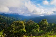 Selva tropical tropical después de la lluvia fotos de archivo