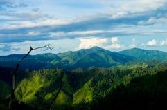 Selva tropical tropical después de la lluvia fotos de archivo libres de regalías