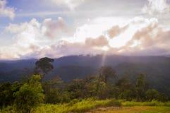 Selva tropical tropical después de la lluvia imagenes de archivo