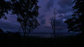 Selva tropical tropical después de la puesta del sol, metrajes