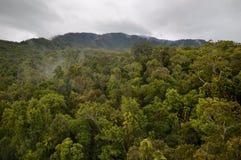 Selva tropical tropical en Queensland fotografía de archivo libre de regalías