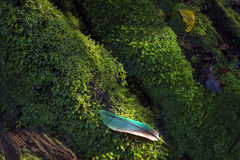 Selva tropical tropical, Queensland, Australia foto de archivo