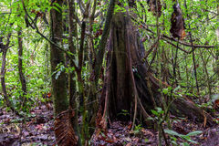 Selva tropical tropical, reserva de Cuyabeno, Suramérica, Ecuador Fotografía de archivo