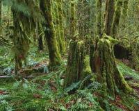 Selva tropical verde Foto de archivo libre de regalías