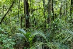 Selva tropical verde luxúria Imagem de Stock Royalty Free